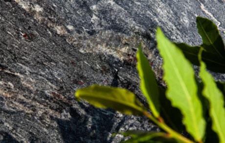 Dunkle Rohplatte aus Naturstein mit bräunlichen Akzenten und grünen Blättern im Vordergrund